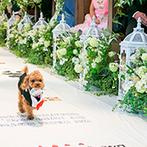 アイネスヴィラノッツェ宝ヶ池:幼い頃からの思い出を紡いだ、手作りのバージンロードを歩む幸せ。指輪を運ぶワンちゃんもキュート