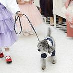 Crevette 名古屋(クルヴェット ナゴヤ):シャンデリアと自然光がきらめくチャペルでのセレモニー。大切な愛犬も、リングドッグとして大活躍!