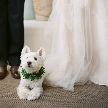 シェラトン・グランデ・トーキョーベイ・ホテル:〇●愛犬とのガーデンリゾート挙式●〇大切な家族と最幸の一日を