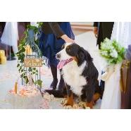北湯沢 緑の森の教会:バージンロードに愛犬も参列!ワンちゃんも大切な家族です♪