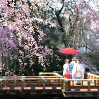 東郷神社/原宿 東郷記念館:【桜もまだ間に合います!】挙式のみOK×本格神殿見学会