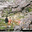 東郷神社/原宿 東郷記念館:万全のコロナ対策でお出迎え◆大特典付きフェア