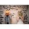ルメルシェ元宇品:【心あたたまるX'masを】17年12月ノエル婚相談会