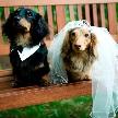 星野リゾート リゾナーレ八ヶ岳:愛犬も参加OK! ペットと一緒のウエディングフェア