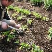 Patrick Kiso Garden 東京・町田:\料理重視なら/オーガニック野菜使用コース試食×ガーデン演出