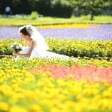 Wedding Story(ウェディングストーリー):和洋装2着ロケーションベーシックプラン¥126.360-
