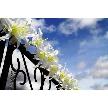 津山鶴山ホテル:6月~9月挙式ご成約限定!夏ご成約おすすめ相談会☆