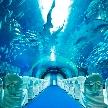 品川プリンスホテル:【VR体験】オンリーワン!水族館でのオリジナルW相談会