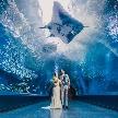 品川プリンスホテル:【VR体験◆水族館チケット付】大人気の水族館ウエディング相談会