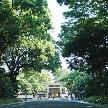 FOREST TERRACE 明治神宮:【新年1月平日限定お下見ご来館特典付】明治神宮の杜満喫フェア