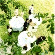 星野リゾート トマム 水の教会:【横浜サロン】9:30スタート!水の教会&氷の教会フェア