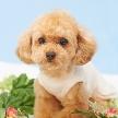 玉姫殿 上田迎賓館:愛犬と一緒に結婚式☆ オンリーわん!ウエディング相談会♪