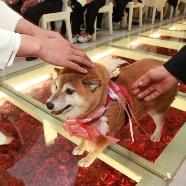 グランヴェルジュ青森迎賓館:【ペットと一緒に☆】ヴェルジュで叶える大切な家族との結婚式♪