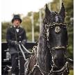 ウェスティンホテル東京:【馬車に乗りたい!】ホースパレード体験★スイーツ付フェア