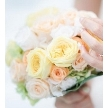 ホテルポートプラザちば:【NEW YEAR!】My Wedding ウィンター相談会