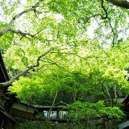 明治の森箕面 音羽山荘:【森の結婚式】豊かな自然に囲まれた音羽山荘の相談会
