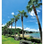 シーサイド平川MASARUのフェア画像