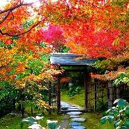 白鳥庭園 THE SHUGEN:★白鳥限定特典付き【年内挙式受付残り1組】日本庭園散策フェア