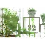 32orchard (サニーオーチャード):ガーデンテラスのような緑あふれる会場でお食事、お酒を片手に語らい楽しんでください。