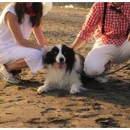 GREENROOM BEACH CLUB(グリーンルーム ビーチクラブ):【愛犬と一緒に♪】大切な人と海を一望できる感動挙式体験フェア