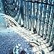 コンラッド大阪:【平日限定】地上200mからの眺望×天空のチャペル