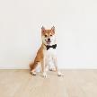 ゆとりろ 軽井沢ホテル アンジェロ教会:【愛犬も参加OK】ペットと一緒にお気軽W相談会