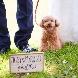 """つま恋リゾート 彩の郷(さいのさと):【ワンちゃんと一緒の結婚式!】""""愛犬連れていける""""フェア"""