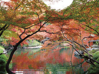八芳園 庭園1画像2-3