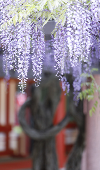 日枝神社結婚式場(日枝あかさか) ロケーション2画像2-1