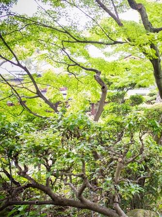 岸和田グランドホール 五風荘画像1-1