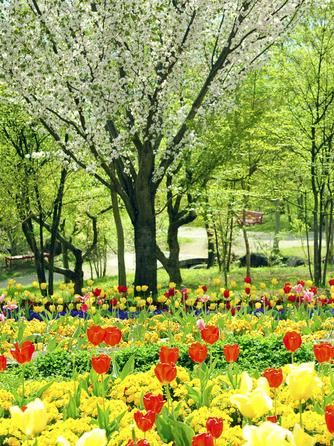 HEIDI'S VILLAGE 花の教会 ロケーション1画像1-1