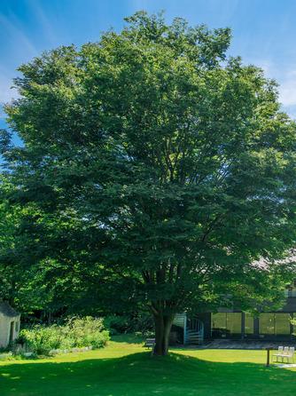 空の庭ウエディング セレモニースペース(空の庭ウエディング)画像1-1