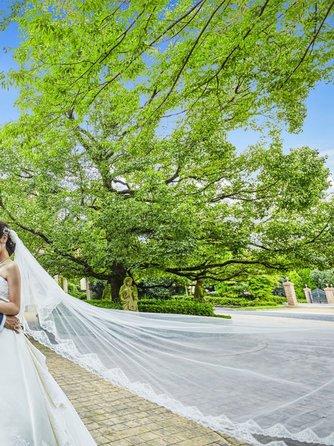 ベルヴィ ディアナ・マリエール セレモニースペース(ガーデンパーティー~緑溢れる貸切空間~)画像1-2