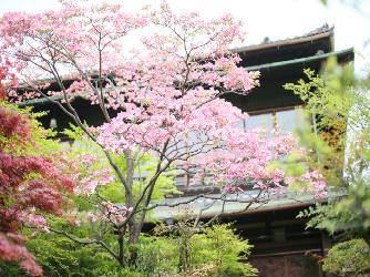 THE GARDEN PLACE SOSHUEN(蘇州園) ロケーション1画像2-1