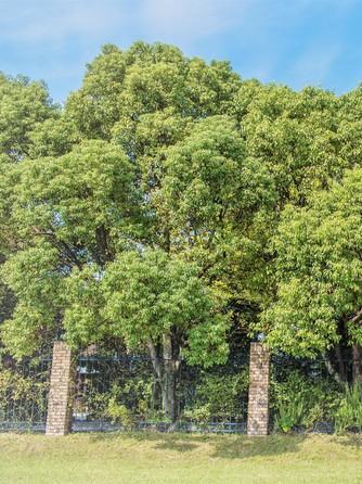 MARRY GOLD(マリーゴールド) 森に囲まれた貸切邸宅で叶うナチュラルW画像1-1