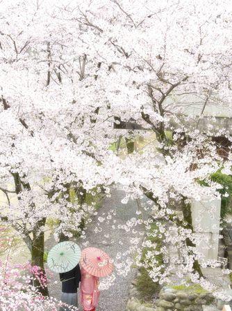 迎賓館 サクラヒルズ川上別荘 撮影スポット1画像2-2