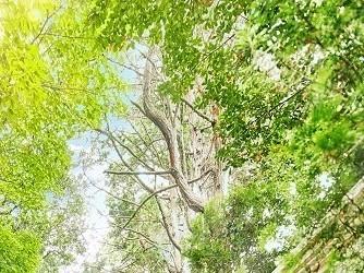 アーカンジェル迎賓館 天神 森の中に佇む1700坪の貸切リゾート邸宅画像1-2