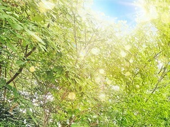 アーカンジェル迎賓館 天神 森の中に佇む1700坪の貸切リゾート邸宅画像1-1