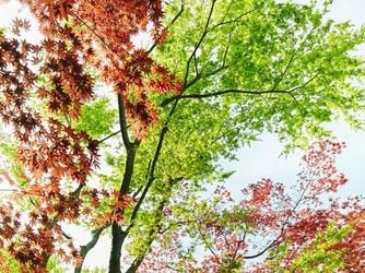 辻家庭園 ~前田家家老旧横山家迎賓館~(金沢市指定文化財) 庭園画像2-2