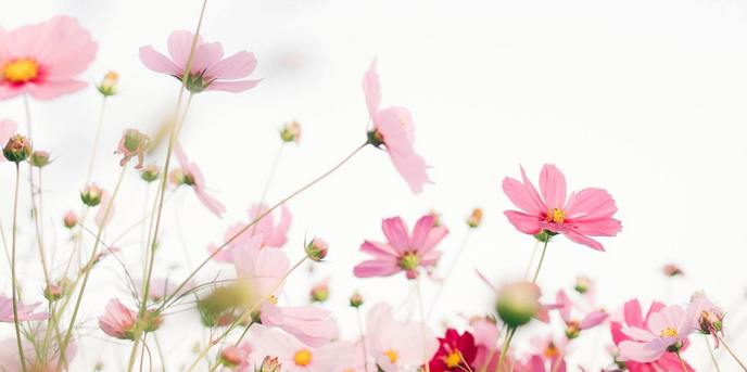 AND FLOWERS その他1画像1-1