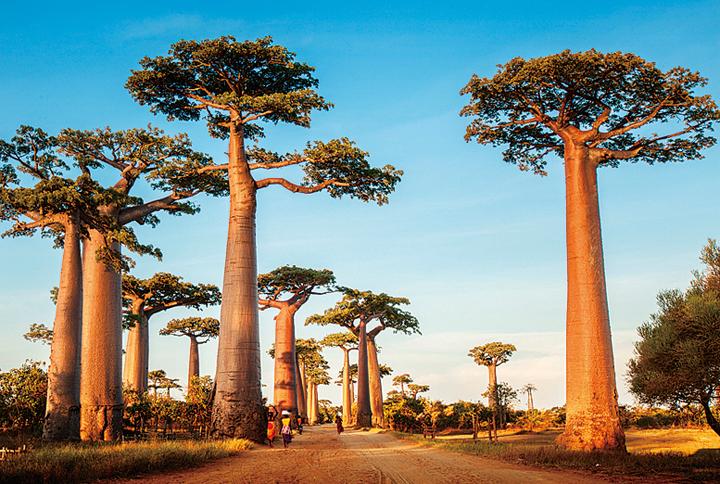 バオバブ街道の夕日(マダガスカル)