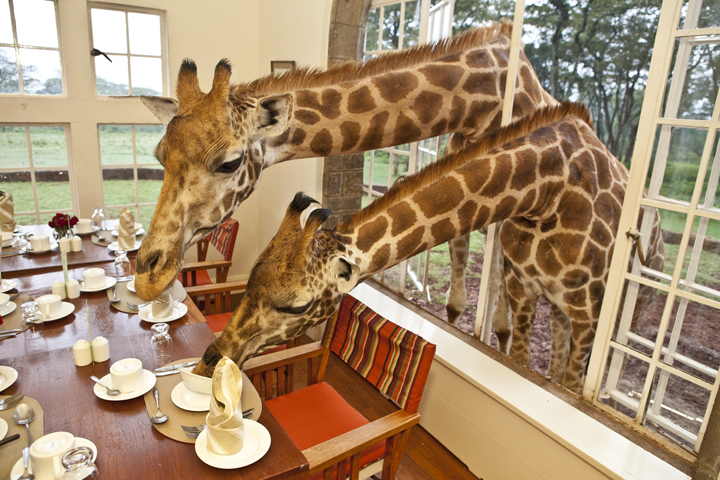 キリンハウスで朝ごはん(ケニア)