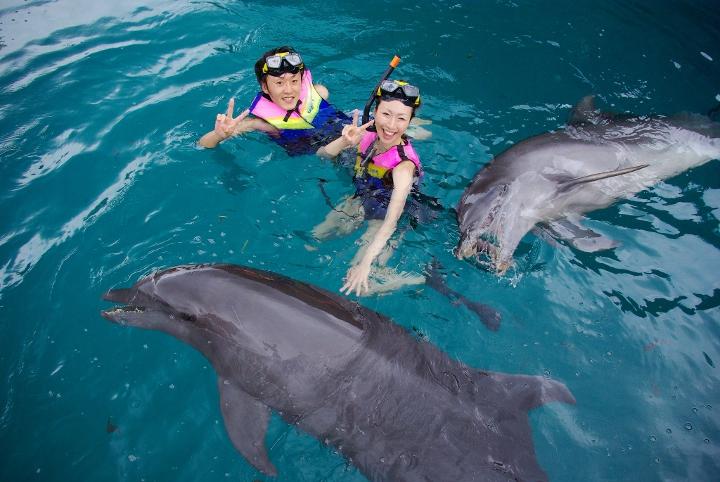 イルカと新郎新婦