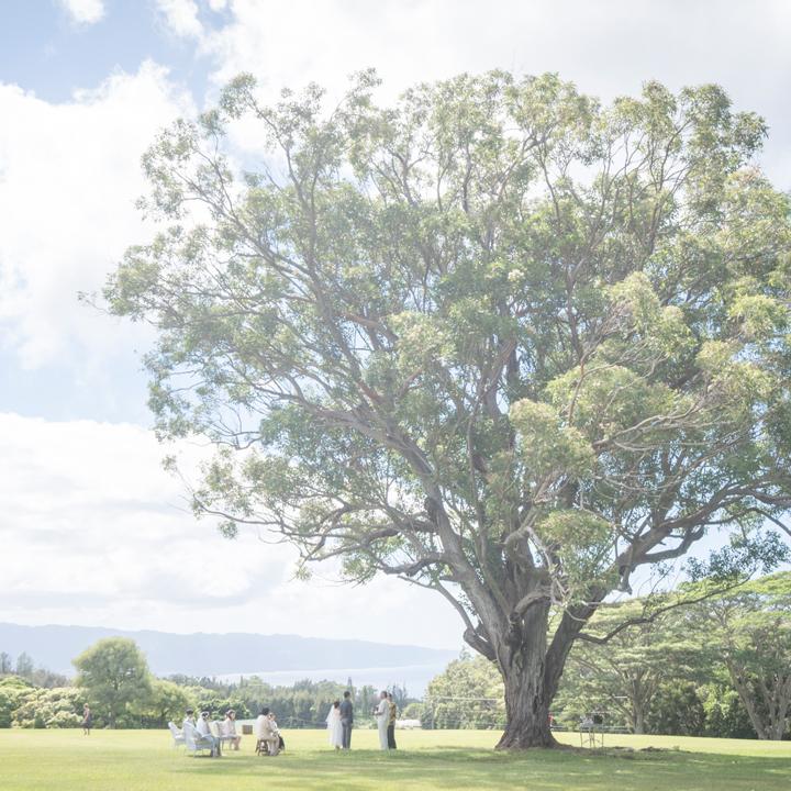 大きな木の下で挙式をするカップル