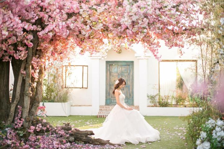 こちらも同スタジオの屋上。韓国ならでは!のピンクの花のセットの中でも甘過ぎないサクラがお気に入り。/桜の木の下で