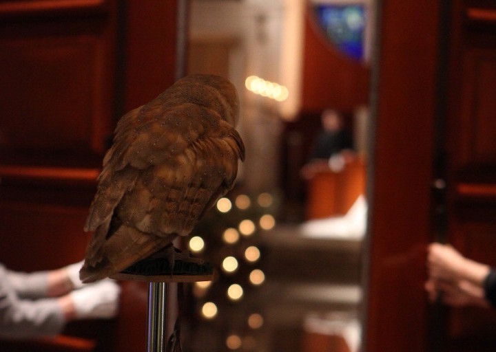 フクロウがふたりの指輪を運ぶ、アウルセレモニー