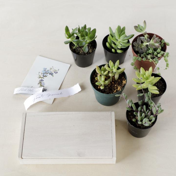小さめの多肉植物、木箱、カード、タグ